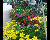 Hanging Garden Baskets in Burley, Idaho, Mary Lou's Flower Cart