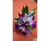Purple Orchid  in Maple ON, Jennifer's Flowers & Gifts