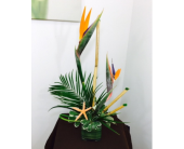 Modern Bird of Paradise in Melbourne FL, Paradise Beach Florist & Gifts