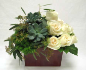 Succulents and Roses in Amherst NY, The Trillium's Courtyard Florist