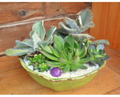Succulent Gardens in Utica NY, Chester's Flower Shop And Greenhouses