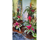 Bromeliad Gardens<br>Starting at $40 in Largo FL, Rose Garden Flowers & Gifts, Inc