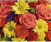 Designer's Choice in Bound Brook NJ, America's Florist & Gifts