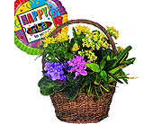 Basket with Balloon in Bound Brook NJ, America's Florist & Gifts