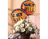 Basket Full of Daisies with Get Well Balloons in Bound Brook NJ, America's Florist & Gifts
