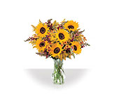 Sunfower Array in Bound Brook NJ, America's Florist & Gifts