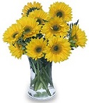Hello Sunshine in Bound Brook NJ, America's Florist & Gifts