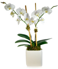 Orchid in Little Rock AR, Tipton & Hurst, Inc.