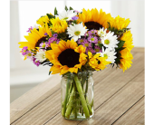 Indianapolis Flowers - Sunflower Fields - George Thomas, Inc.