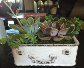 Succulents by Fedorenko in Woodland Hills CA, Abbey's Flower Garden