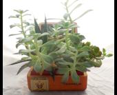 Succulent Garden VII