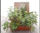 Succulent Garden VIII