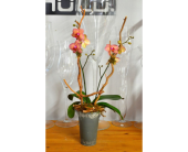 Colorful Rustic Orchid in Oakville ON, Margo's Flowers & Gift Shoppe