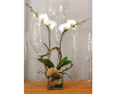 Modern White Orchid in Oakville ON, Margo's Flowers & Gift Shoppe