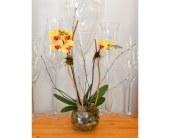 Modern Orchid Globe in Oakville ON, Margo's Flowers & Gift Shoppe