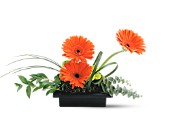 Teleflora's Zen Gerbera Bowl in Rochester NY, Fabulous Flowers and Gifts