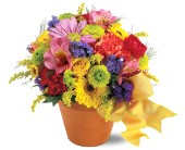 Teleflora's Fresh Blossom Potpourri in Buffalo WY, Posy Patch