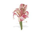 Pink Alstroemeria Boutonniere in St. Louis MO, Walter Knoll Florist