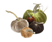 HOT SKWASH VELVET PUMPKINS in Bellevue WA, CITY FLOWERS, INC.