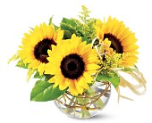 Teleflora's Sassy Sunflowers in Vancouver BC, Downtown Florist