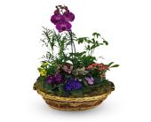 Blooms of Love in Missoula, Montana, Bitterroot Flower Shop