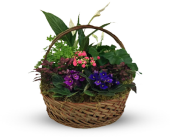 Garden Dream in Missoula, Montana, Bitterroot Flower Shop