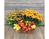 Double Autumn Mum Basket in Smyrna GA, Floral Creations Florist