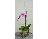 Bear Creek Botanical Orchid in Redmond WA, Bear Creek Florist