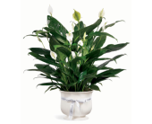 Comfort planter in Medford, Oregon, B. Cazwell's Floral Dezines LLC