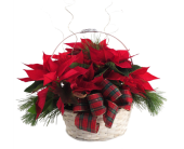 Triple Poinsettia Basket in Southfield MI, Thrifty Florist