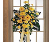 Brighter Blessing Spray in Indianapolis, Indiana, George Thomas Florist