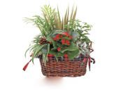 Holiday Plaid Garden in West Seneca NY, William's Florist & Gift House, Inc.