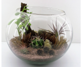 Desert Terrarium in North Vancouver BC, Special Moments Flowers And Gifts