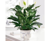 The FTD� Comfort Planter in El Paso, Texas, Executive Flowers