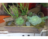 succulents in Phoenix AZ, foothills floral gallery