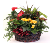 Tropical Getaway in Grimsby ON, Cole's Florist Inc.