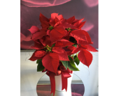 Red Poinsettia in Santa Monica CA, Santa Monica Florist