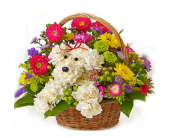 Harrison Flowers - DEAL OF THE WEEK, ONLY: - Nature Nook Floral Center