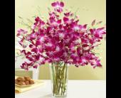 San Jose Flowers - Dazzling Dendrobium - Santa Clara Citti's Florist