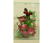 Butterfly Gardens (M) in Belleville MI, Garden Fantasy on Main