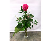 Single PINK in Belleville ON, Live, Love and Laugh Flowers, Antiques and Gifts