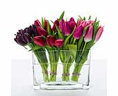 Queens Flowers - Tulips' Kiss - Starbright Floral Design