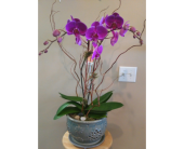 Magnificent Orchid  in Tampa, Florida, Buds Blooms & Beyond