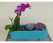 Orchid & Succulent planter in Redmond WA, Bear Creek Florist