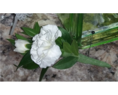 Boutonniere4 in Valley City OH, Hill Haven Farm & Greenhouse & Florist