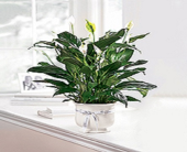 Comfort Planter in New Port Richey, Florida, Holiday Florist