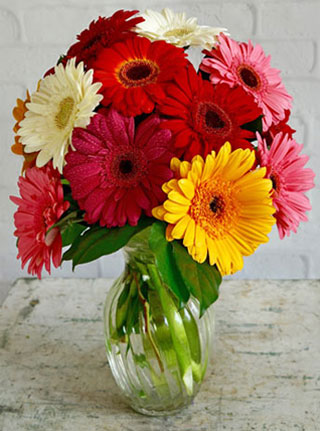 Happiest Gerberas in Omaha NE, Stems Florist