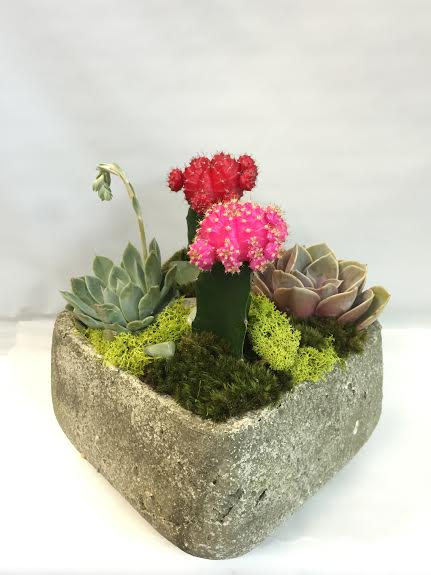 Stone Succulent Cactus Garden in West Los Angeles CA, Sharon Flower Design