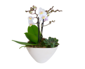 Medium Orchid Planter, picture