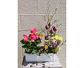 Spring Joy in Redmond WA, Bear Creek Florist